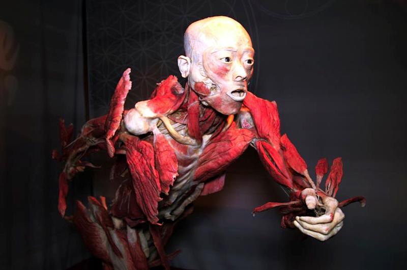 """""""Bodies"""" ahora expone en  Las Vegas efectos de COVID-19"""