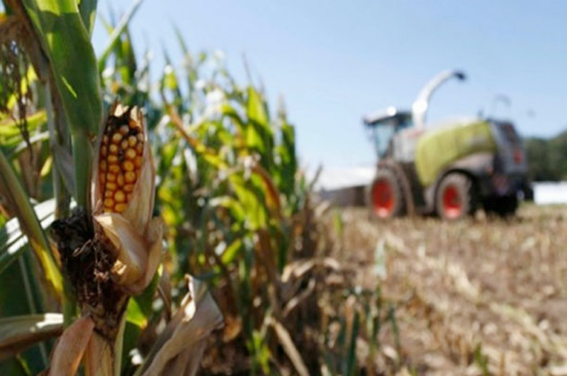 México y Honduras atenderán migración con desarrollo agropecuario