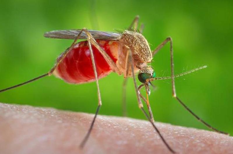 Por el Virus del Nilo insta autoridades a extremar medidas de cuidado