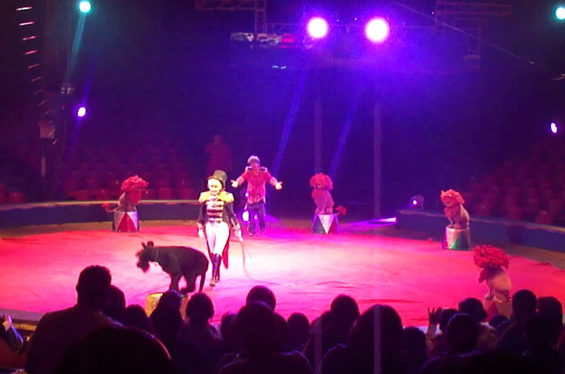 Circos mexicanos se mudan a EUA ante prohibición del uso de animales