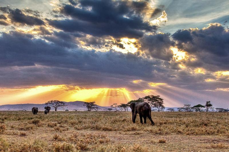 Opinión: Safari
