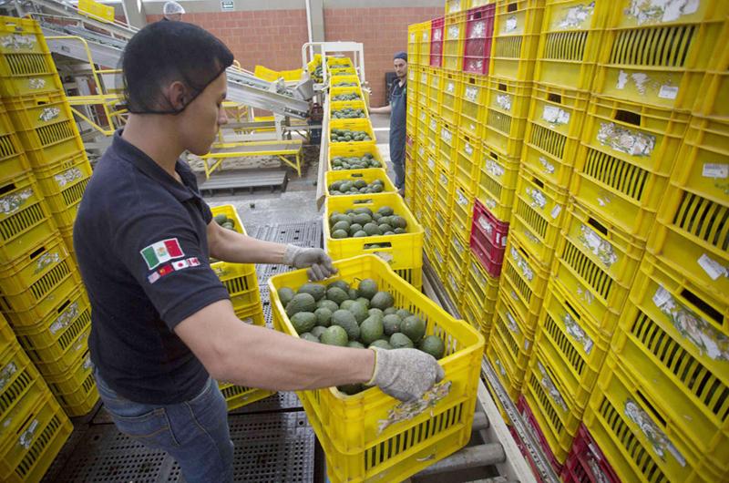 Texas atrae a más mexicanos para fortalecer economía