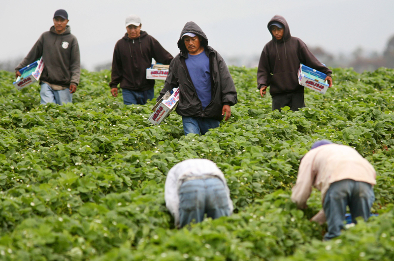 Política migratoria restrictiva derrumbaría fuerza de trabajo de Estados Unidos