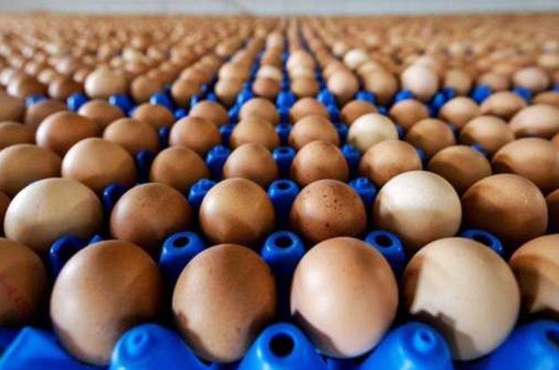 Retiran en EUA más de 200 millones de huevos por temor a Salmonela